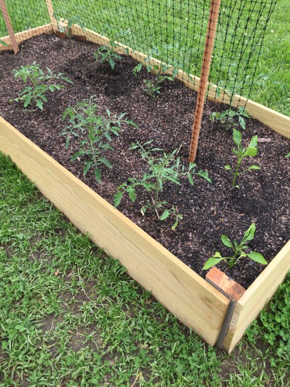 easy diy raised vegetable garden